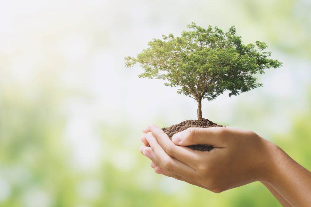 Hand hält großen Baum, der auf grünem Hintergrund wächst. Öko-Tag der Erde Konzept
